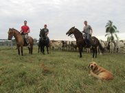 South American ranch
